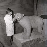 Bob davey who now paints under the name Hamilton Sloan working on Peter the Polar Bear in the Ulster Museum in nineteen seventy three