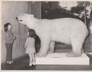 two children pictured with Peter the Polar Bear at the Ulster Museum