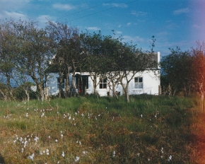Hamilton Sloan studio and cottage between gweedore and bunbeg showing bog cotton